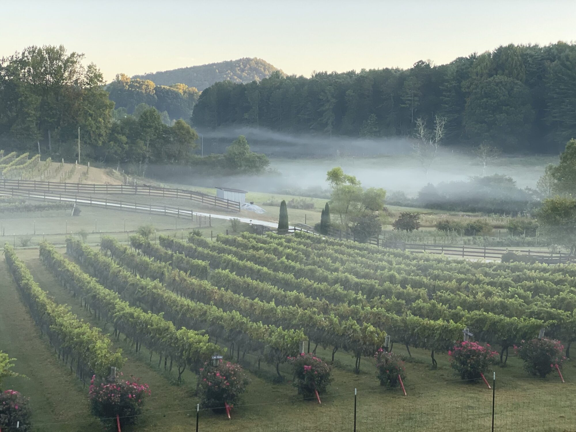 stonewall creek vineyards, history
