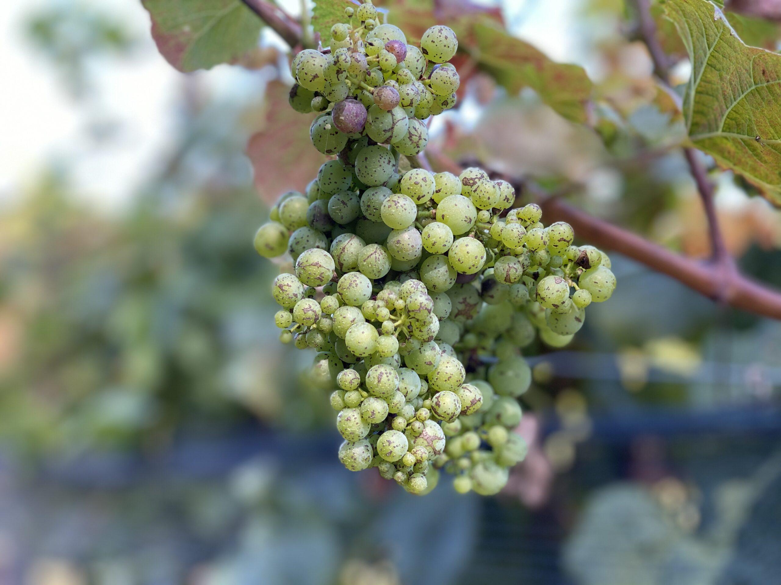 north georgia wine