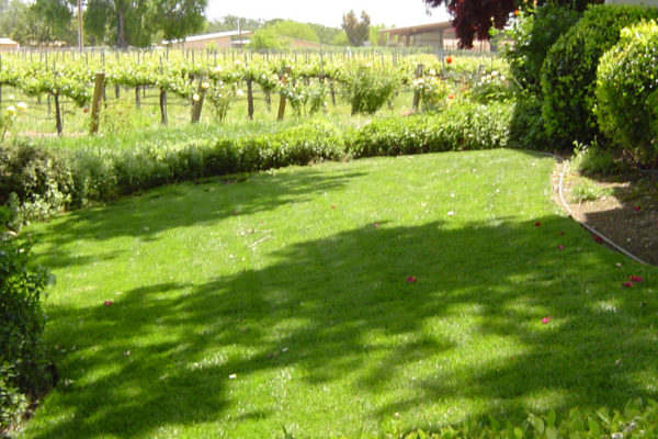 front_yard_3