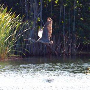 tours-black-river-bird