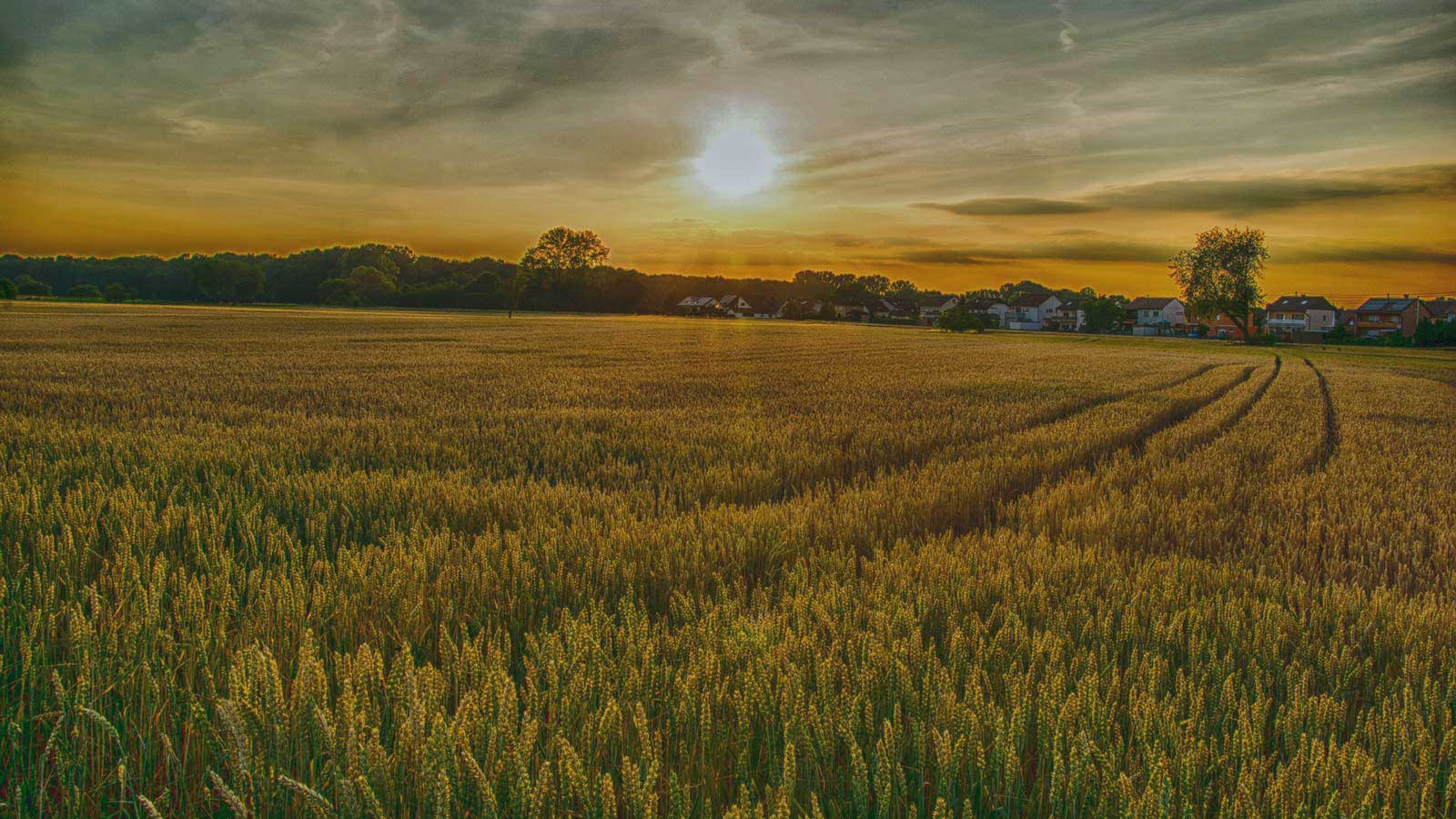 Agriculture and Farm Land Title Company