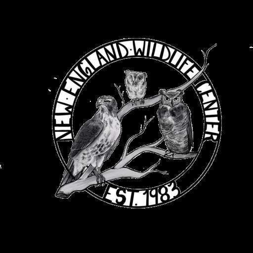 Cape Wildlife Center