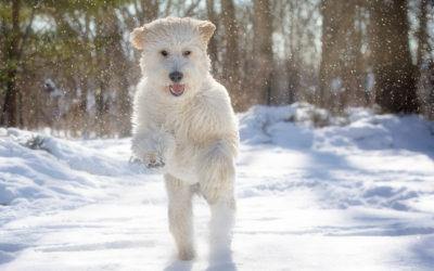 """""""Let it Snow""""- """"Let it Snow!"""""""