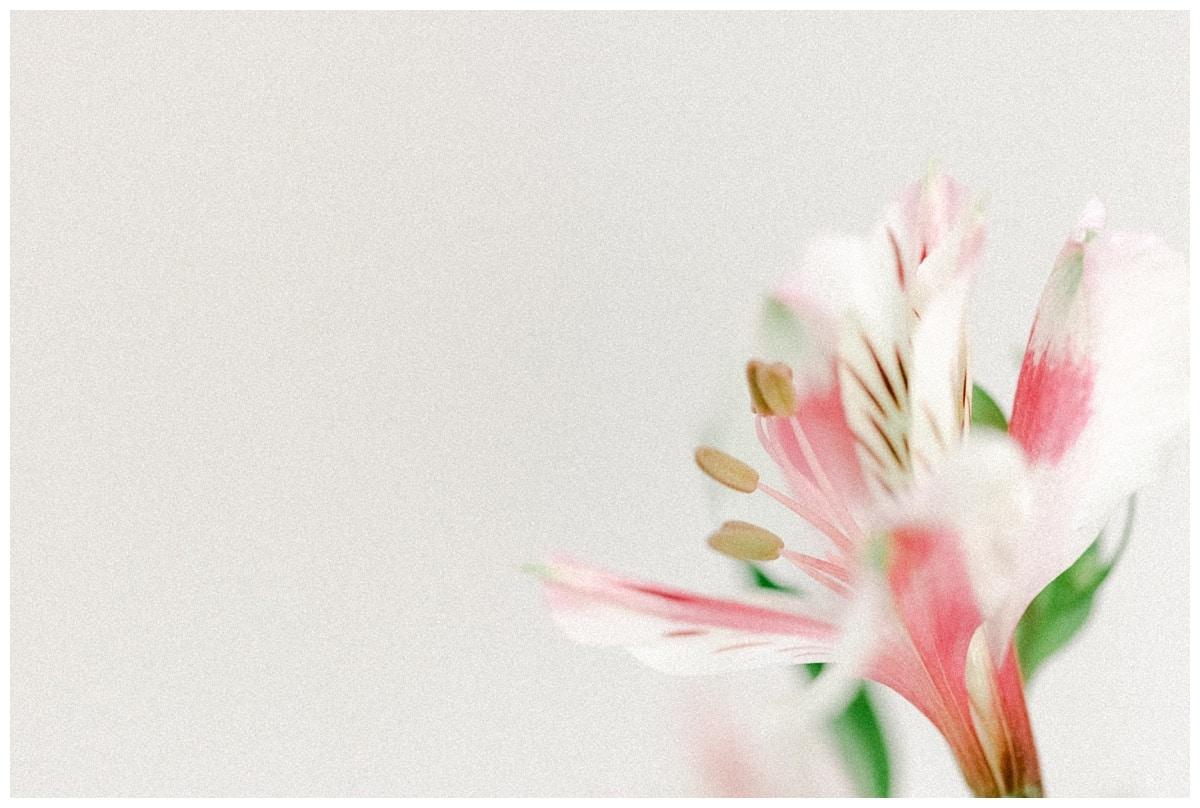 Blancas Flowers Elfin Forest