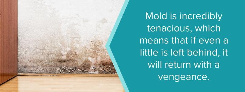 mold will return