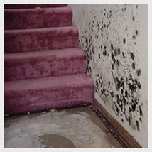 Mold removal and remediation and water damage in chicago