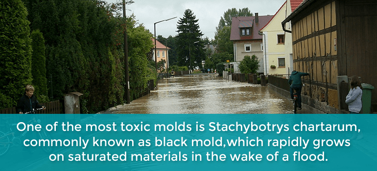 after a flood mold spreads fast