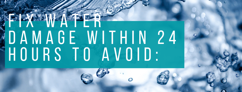 fix water damage within 24 hours