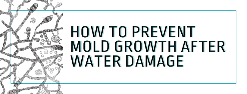 prevent mold growth in walls
