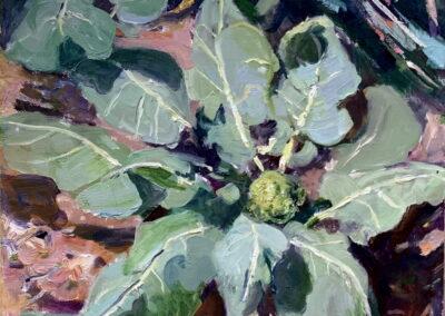 Broccoli Coming
