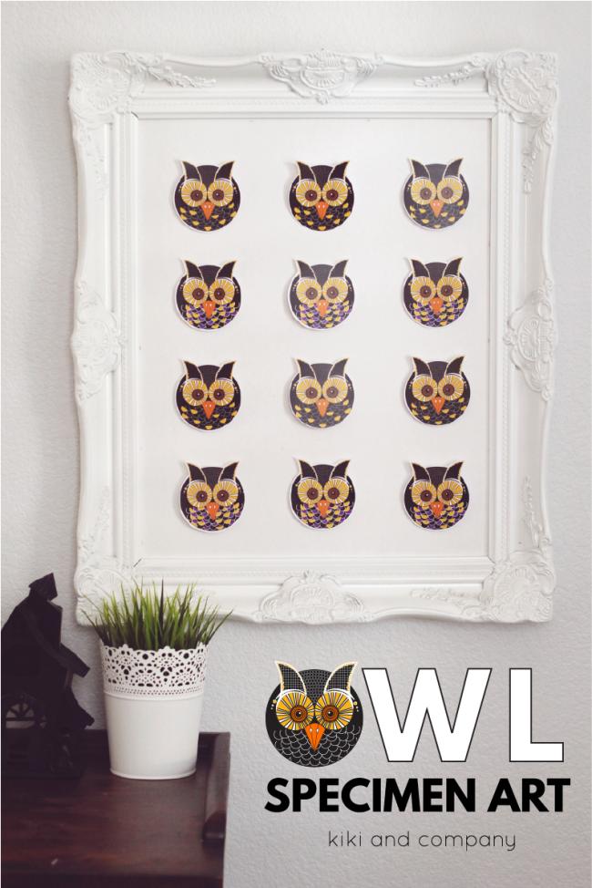 Owl Specimen Art from kiki and company