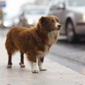 brown dog standing on a sidewalk