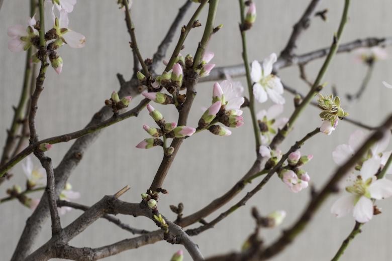 bloom6