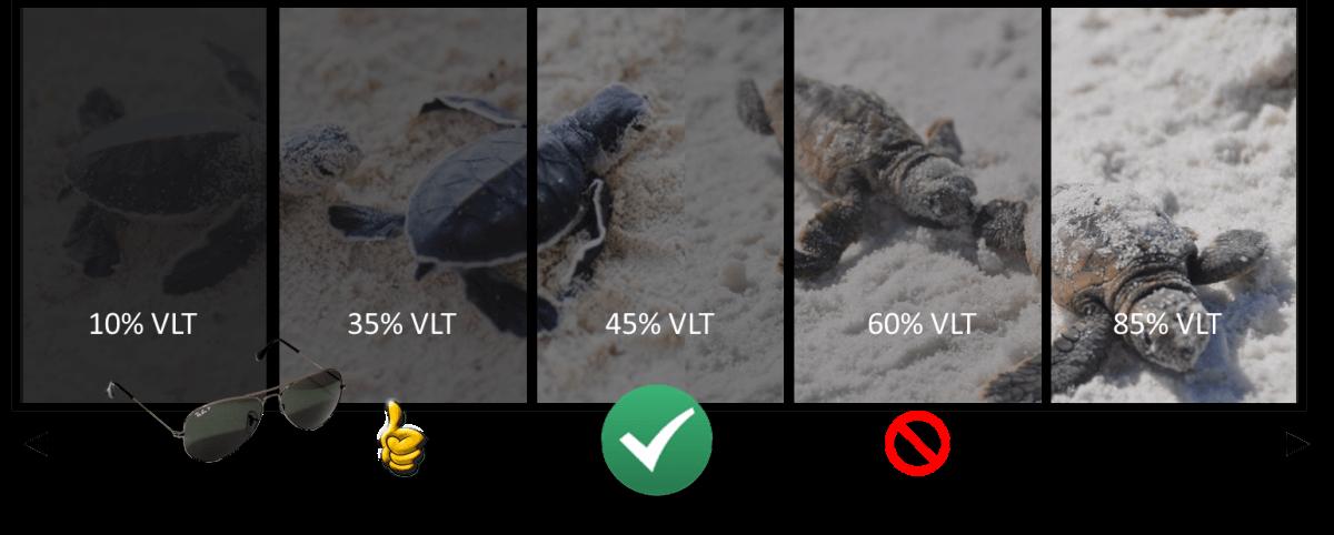Turtle Code Glass