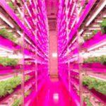 Vertical Farming Lighting