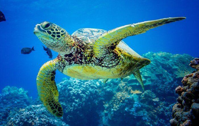 Conservación de las Tortugas Marinas