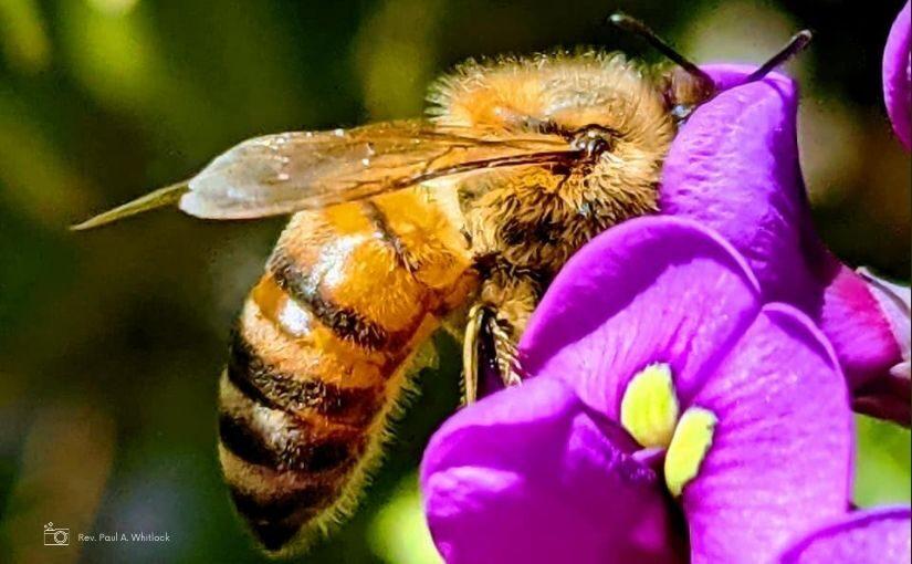closeup of bee on purple flower
