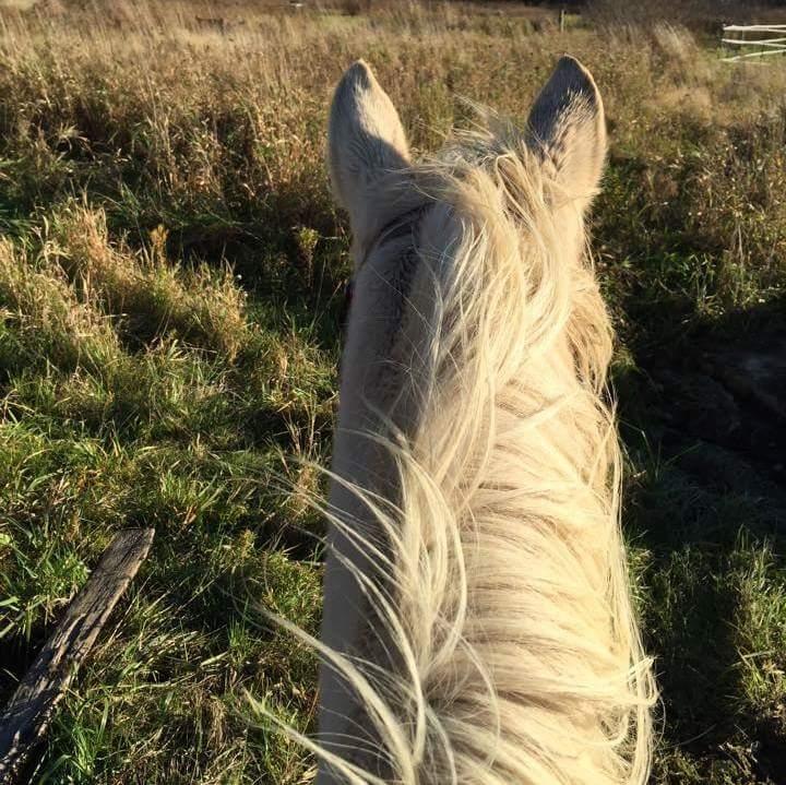 Kate Krival riding 2015