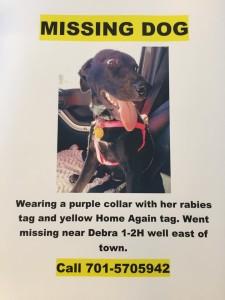 missing dogferrel