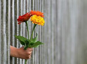 giving hand flower through gate