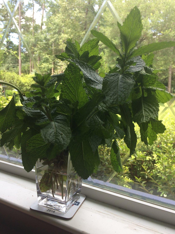 Mint - a natural wonder...