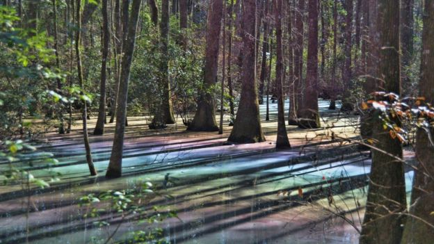 Who knew we had rainbow swamps?