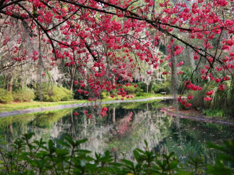 Maclay Gardens State Park | Little English Guesthouse B&B, Tallahassee, FL