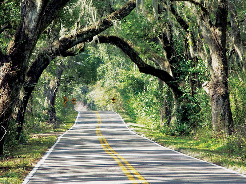 Canopy road – Miccosukee Road | Little English Guesthouse B&B, Tallahassee, FL