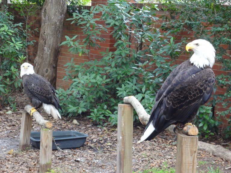 Looking for a little summer adventure with birds of prey?