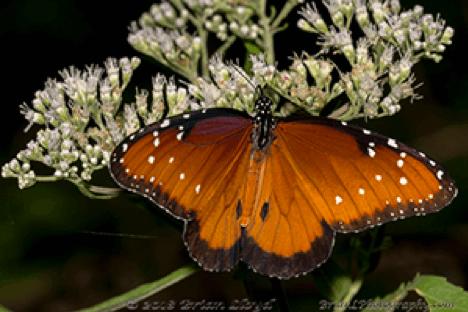 It's always butterfly season here in Tallahassee!