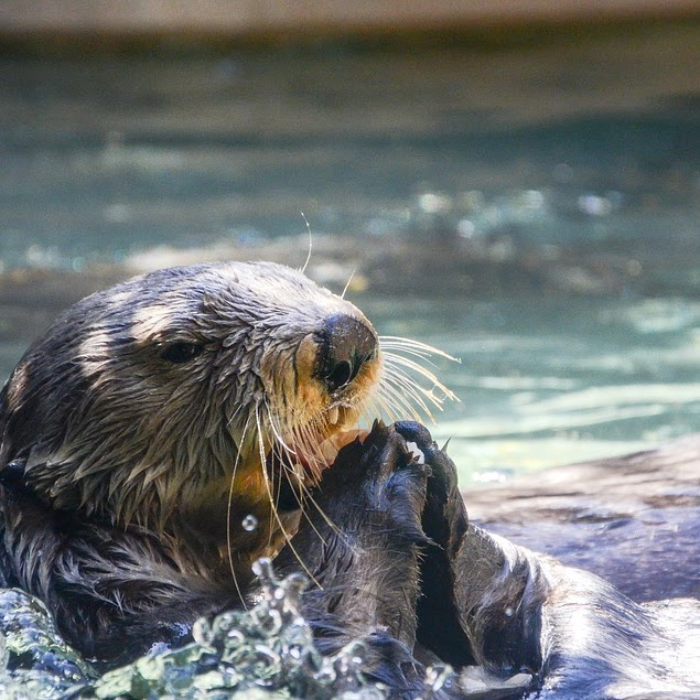 Animal Cams and Virtual Tours