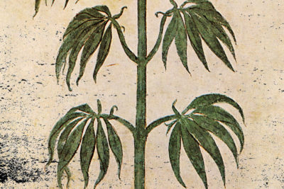 Cannabis in the Ancient World