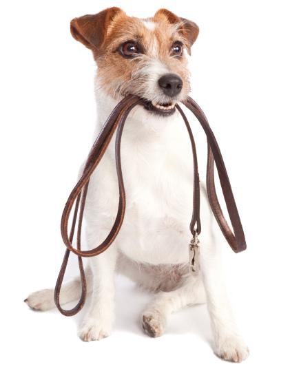 Pet sitting, pet sitters, dog walking, MD pet sitters, columbia MD Pet sitters
