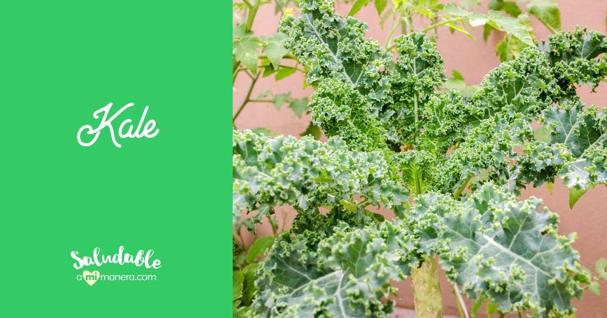 Kale, Col Rizada O Berza: 10 Beneficios Nutricionales