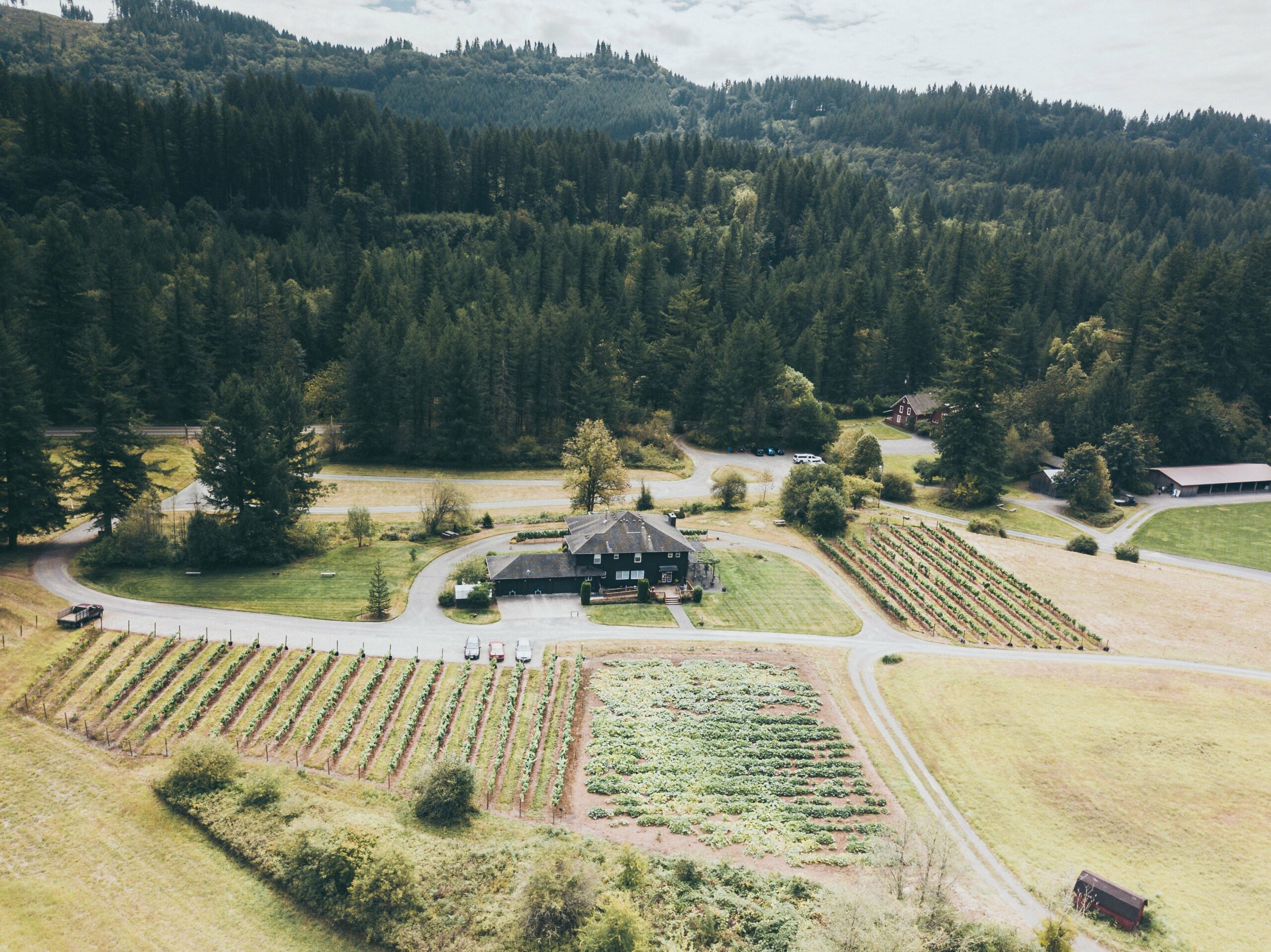 Aerial Landscape of Pomeroy Cellars Terrain featuring a Vintage House Woods and Wine Fields