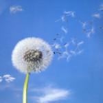 Willow flower iStock_000003412503XSmall
