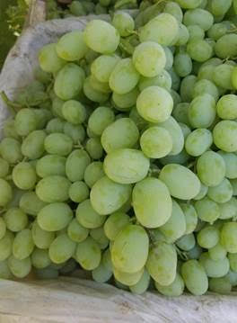 Tables Grapes National Supplier