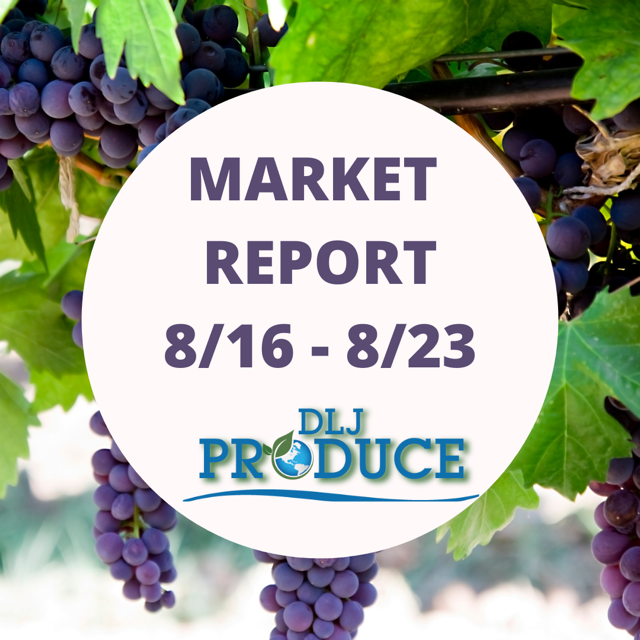 Market Report August 16 to August 23