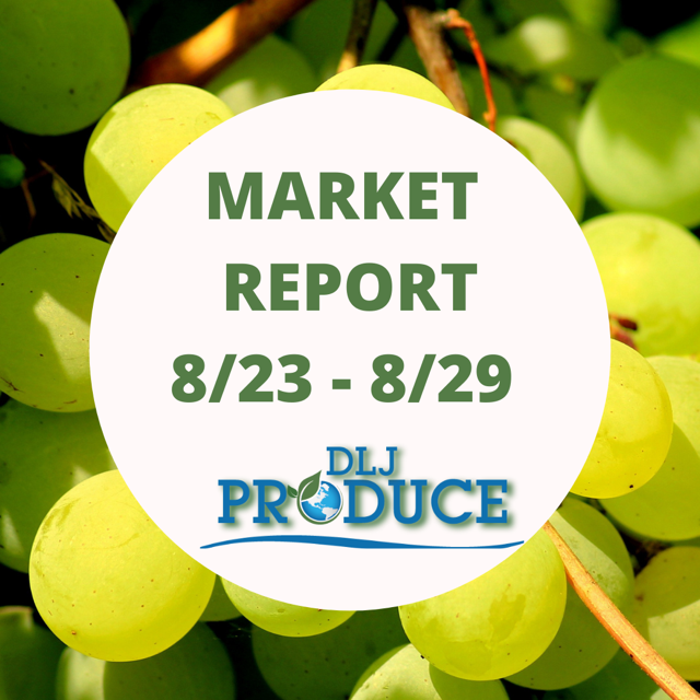 Market Report August 23 to August 29