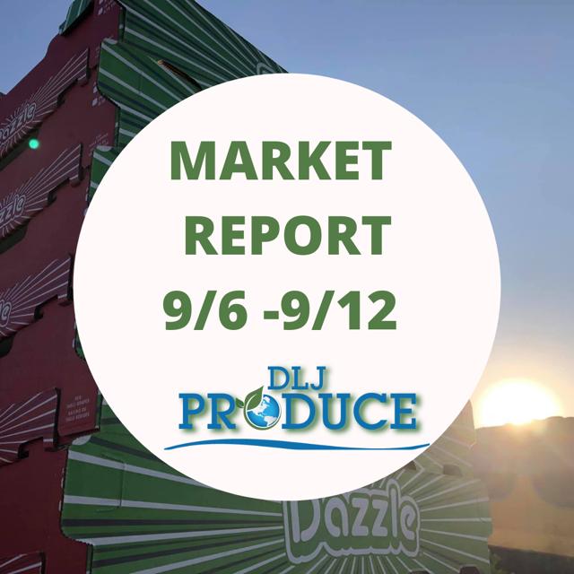 Market Report September 6 to September 12