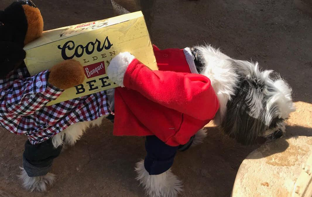 dog wearing costume with beer