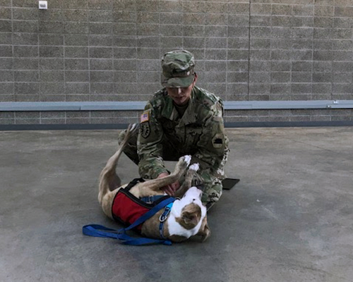 Team Member Leslie in military uniform playing with her dog