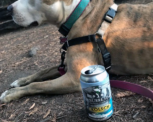 Natural Bridges IPA non-alcoholic beer with dog in background