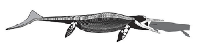 This Ichthyosaur Died After Devouring a Creature Nearly As Long As Itself
