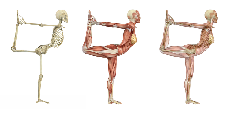 anatomical dance