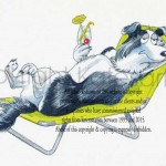 relaxed collie for feed company marketing project
