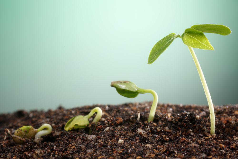 everything you need to know about growth marketing