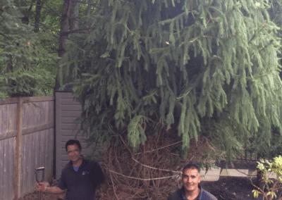 Tree work Pruning