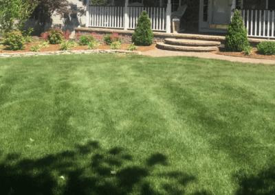 No Weeds lawn