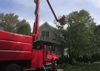 Cherry Picker Tree work